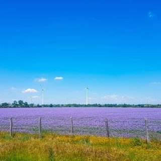 When you love purple and you find this view 😍....#travelphotography #travelling #vanlife #hungaryhighway